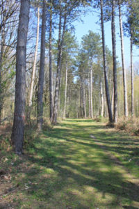 Forest XXV