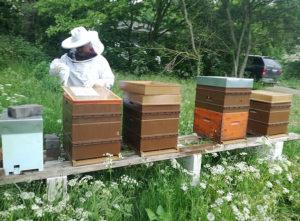 Bijenhouder - Miel des Petits Talus